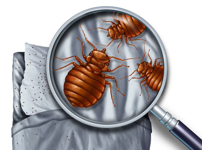 Cleveland Bed Bug Exterminators
