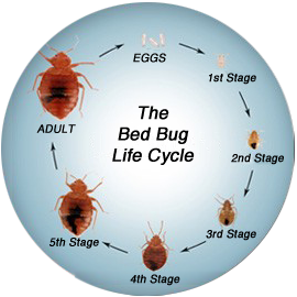 Prevent Bed Bugs Bed Bugs In Home How To Get Rid Of Bed Bugs