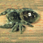 Control of spiders in your home