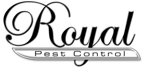 Spider Rays Pest Control in Port Clinton is now part of the Certified Pest Control family of companies