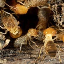 Infestation of termites treated